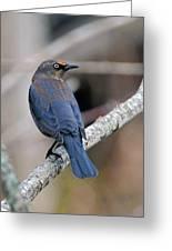 Rusty Blackbird Greeting Card