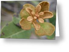 Rusty Lyonia Greeting Card