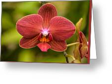Rusty Orchid Greeting Card