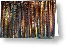 Rusy Forest Greeting Card