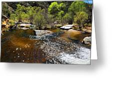 Sabino Creek Greeting Card