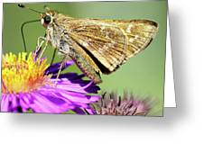 Sachem Skipper Greeting Card