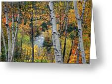 Saco River And Birches Greeting Card