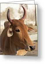 Sacred Cow Greeting Card