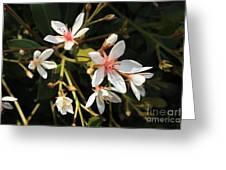 Sacred Heart Flowers Greeting Card