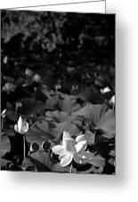 Sacred Lotus #2.    Black And White Greeting Card