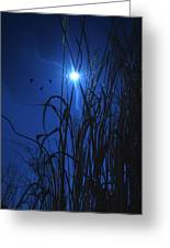 Sacred Moon... Greeting Card