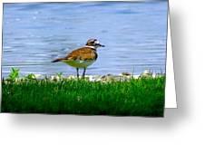 Sad Bird Near Pond Greeting Card