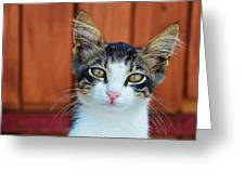 Sad Cat Greeting Card