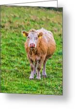 Sad Cow - Painterly Greeting Card