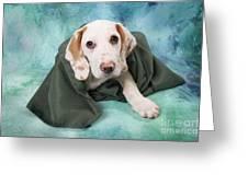 Sad Dog On Pastels Greeting Card
