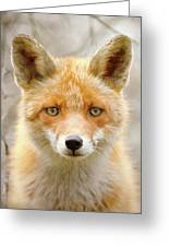 Sad Eyed Fox Of The Lowlands - Red Fox Portrait Greeting Card