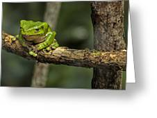 Sad Green Greeting Card