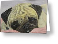 Snugly  Pug Greeting Card