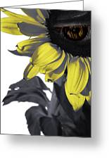 Sad Sunflower Greeting Card