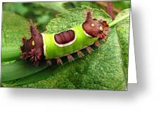 Saddleback Caterpillar Greeting Card