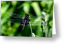 Saddlebag Dragonfly Greeting Card