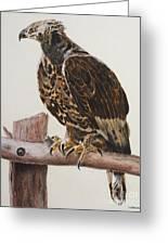 Safari Hawk Greeting Card