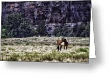 Safe In The Valley Greeting Card