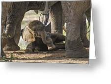Safest Baby In Africa  Greeting Card