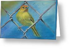Safron Finch Greeting Card