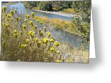 Sage Along The River Greeting Card