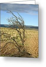 Sage Brush And Tumble Weed Greeting Card