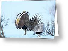 Sage Grouse Greeting Card