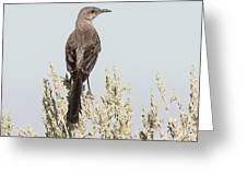 Sage Thrasher On Perch Greeting Card