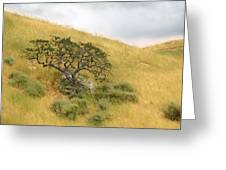 Sage Under Oak Greeting Card