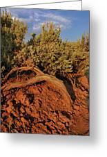 Sagebrush At Sunset Greeting Card