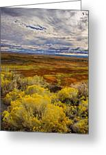 Sagebrush Country Greeting Card