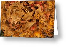 Sago Seeds Greeting Card