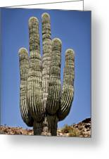 Saguaro 2 Greeting Card