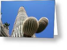Saguaro 2 Greeting Card