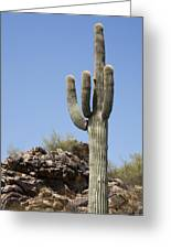 Saguaro 3 Greeting Card