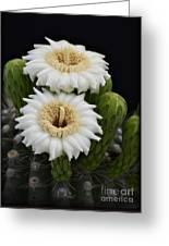 Saguaro Blooms II Greeting Card