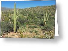 Saguaro Cacti Tucson Az Greeting Card
