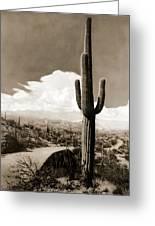 Saguaro Cactus 3 Greeting Card