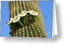 Saguaro Cactus Flower 8 Greeting Card