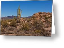 Saguaro Century Greeting Card