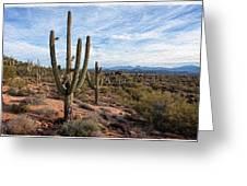 Saguaro Fields Greeting Card