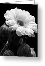 Saguaro First Bloom Greeting Card