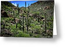 Saguaro Hillside Greeting Card