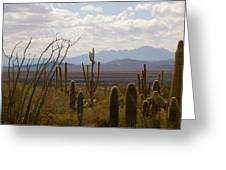 Saguaro National Park Az Greeting Card