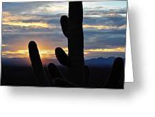 Saguaro National Park Sunset Landscape Greeting Card