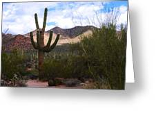 Saguaro National Park Greeting Card