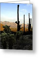 Saguaro Silhouette Greeting Card
