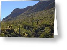 Saguaros And Other Greenery  Greeting Card