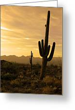 Saguaros At Sunset Greeting Card